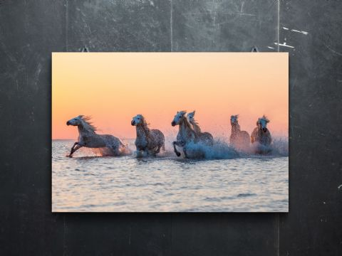 Camargue Sunrise Large Canvas Print